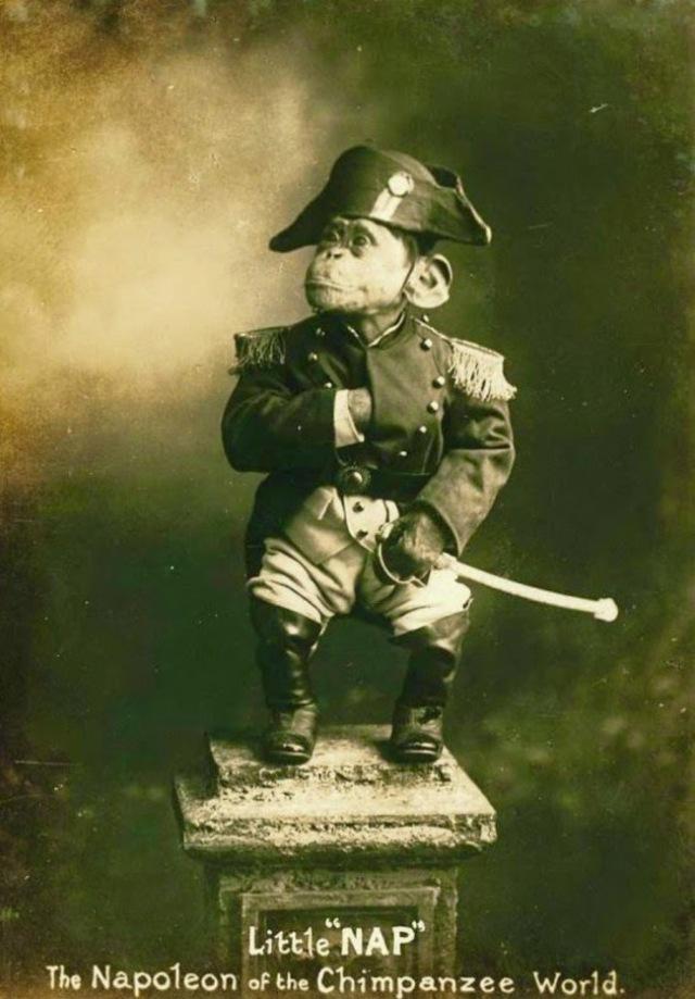 09-Rare-History-Photos-Little-Nap-Of-The-Chimpanzee-World1